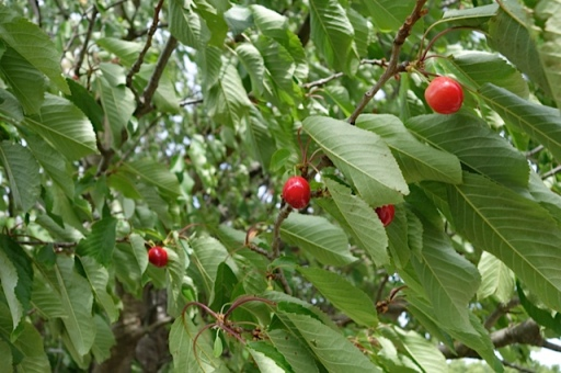 Et voila...the fruit