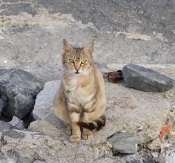 Cat on the rocks