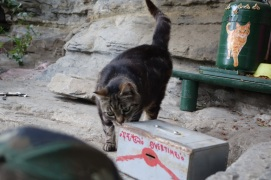 Cat sanctuary near Monterosso